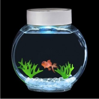 Fincredibles l 39 aquarium poisson lectronique 38 90 for Quand changer eau aquarium poisson rouge